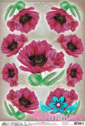 Poppies on a beige background